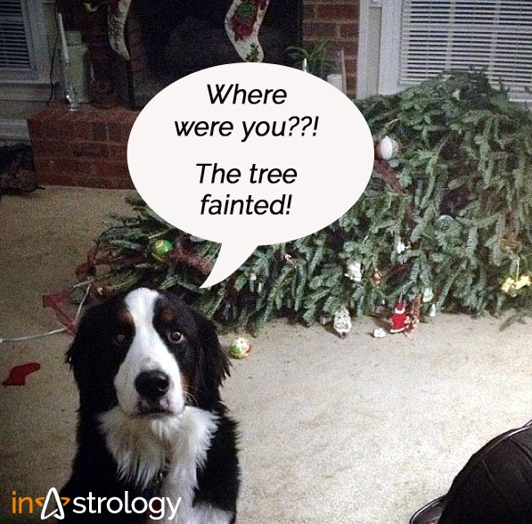 Instrology humor: Dog and fainted tree